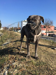 Any-season Antifrost Muzzle for Cane Corso⊛