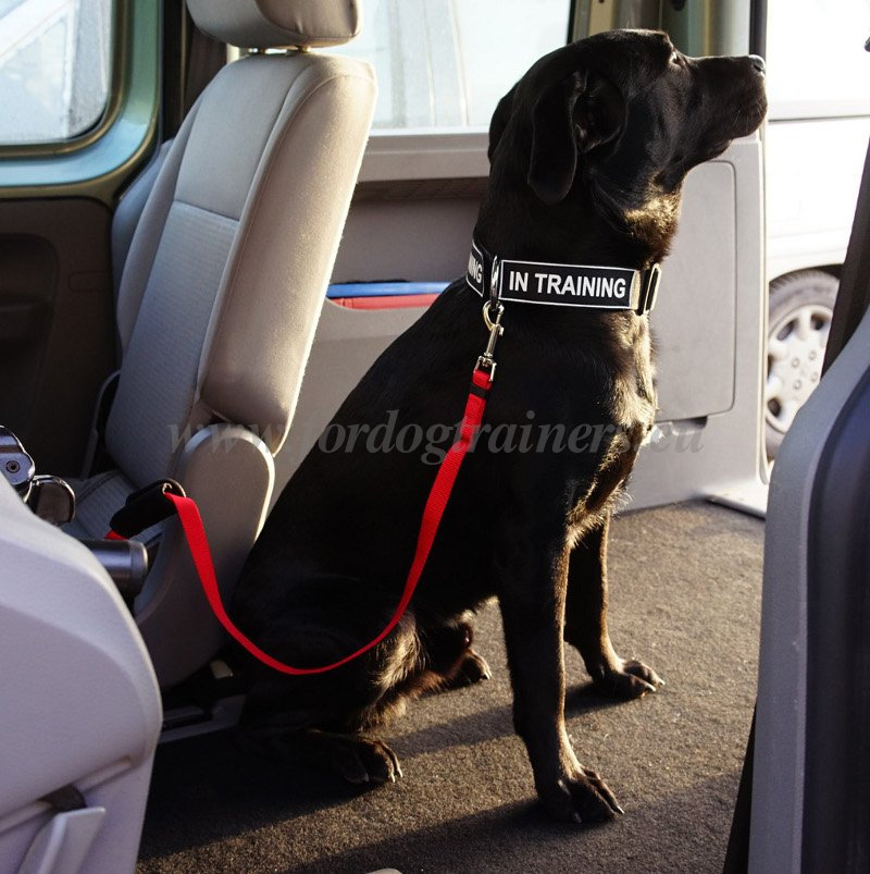 Nylon Leash for Car Dog Security
