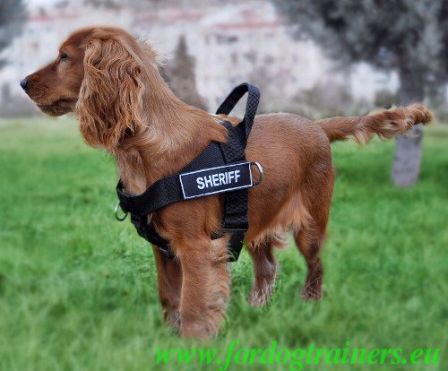 Dog Training Nylon Harness