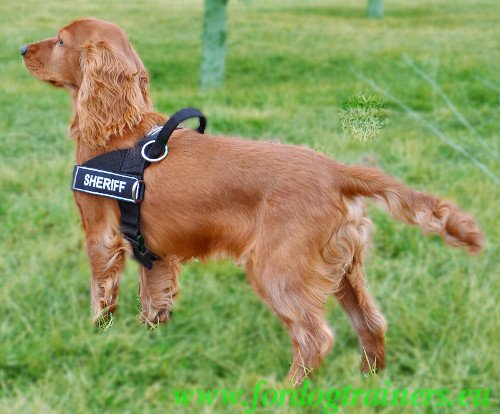 Pulling Harness for Small Dogs