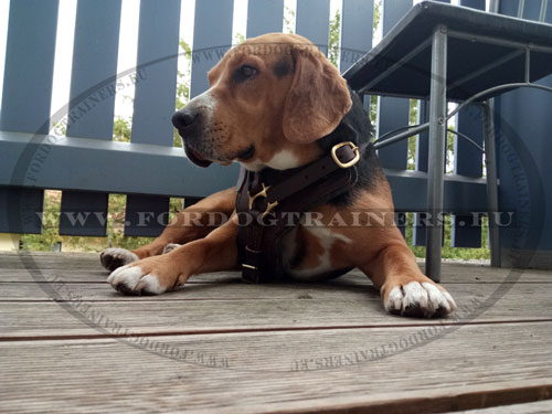 Medium Gun Dog Training Harness