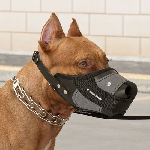 Waterpfoof Nylon Leather Muzzle for Pitbull