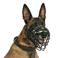 Malinois