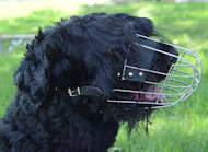 Black Russian Terrier Large Wire Basket dog muzzle