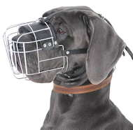 Wire basket muzzle for Great Dane wonderful option