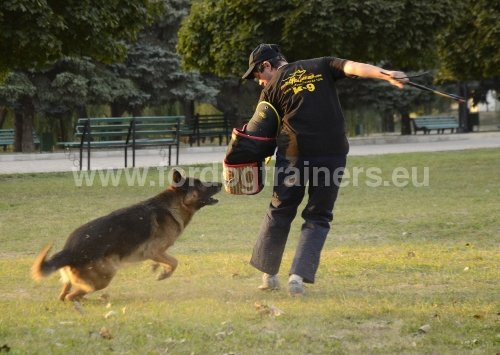 Rappel «Attaque» : Dog harness, Dog muzzle, Dog collar