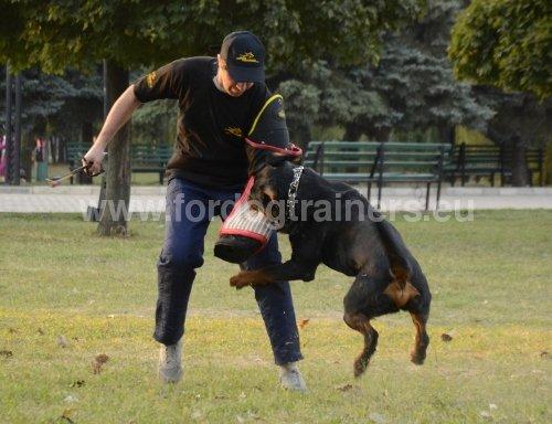 Materiel dressage chien attaque