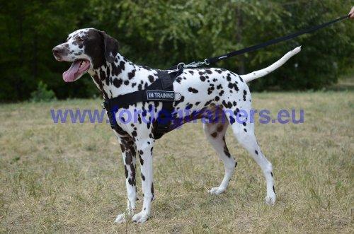 rappel reste ou pas bouger dog harness dog muzzle dog collar dog leash bite sleeves. Black Bedroom Furniture Sets. Home Design Ideas