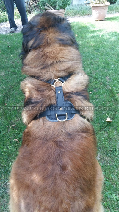 Heavy Duty Dog Pet Harness for Large Dog