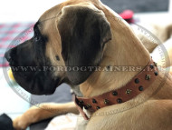 Decorated Leather Collar for Great Dane