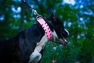 Pink Leather Dog Collar with Spikes