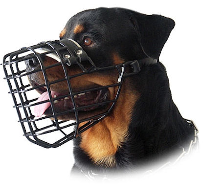 Antifrost Muzzle for Rottweiler