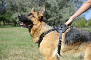Dog Tracking Training Harness