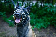 Dog Head Collar with Spikes for Malinois