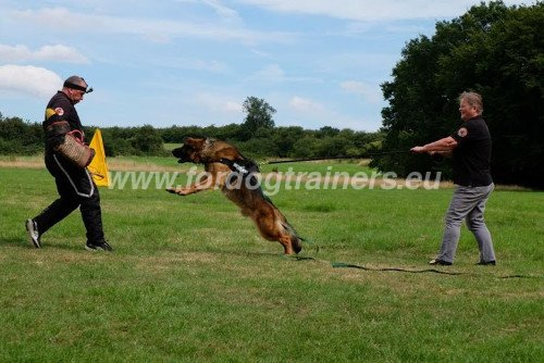 Dog Training with Protective Sleeve