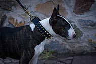 Spiked Dog Collar for Bull Terrier