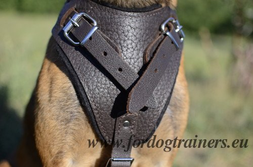 Padded Harness for Belgian Shepherd
