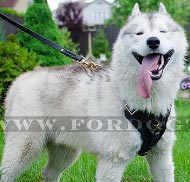 training Leather Harness for Husky