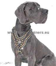 Great Dane Royal Dog Studded Leather Harness ❖