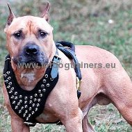 Decorated