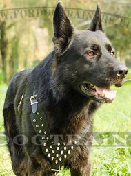 Spiked Dog Harness Special for German Shepherd ✤
