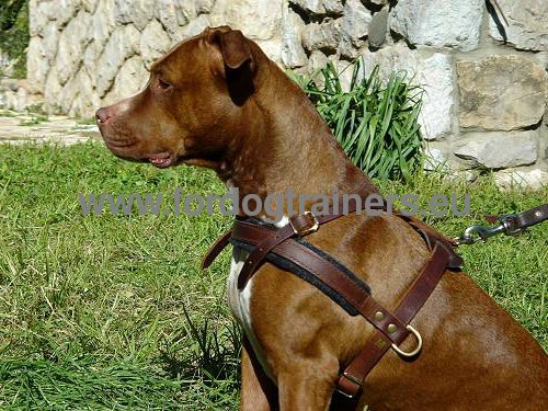 Strong resistant dog harness for Pitbull