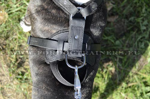 Comfortable Leather Harness