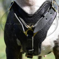 Padded Dog Harness, Exclusive Leather Handcrafted ! ❦