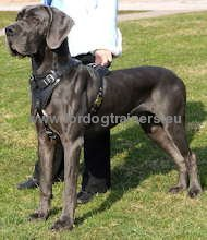 Protection/Attack Leather Harness for Great Dane ⚑