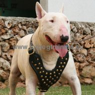 Studded Dog Leather Harness for Bull Terrier and similar breeds