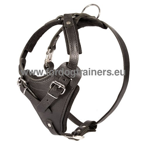 Harness for Great Dane excellent quality