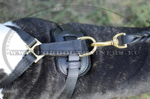 Comfortable Dog Harness