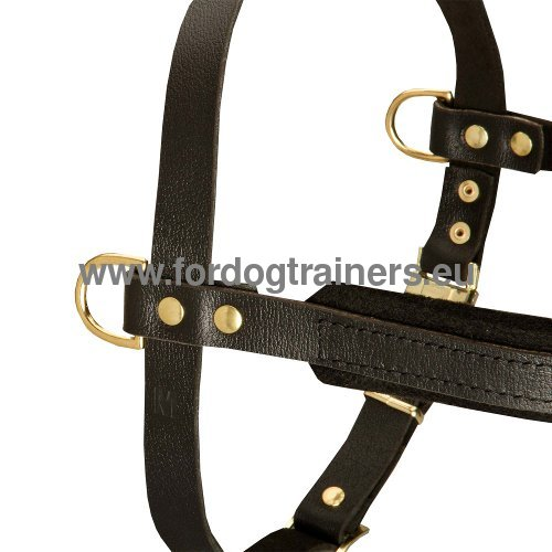 Leather dog harness for walks, pulling and sprts for