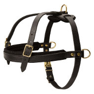Tracking Dog Harness Leather