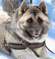Husky Tracking, Pulling, Walking Leather Dog Harness &#10043
