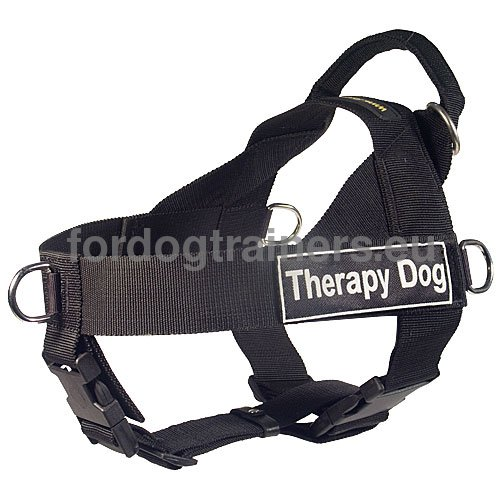 Dog