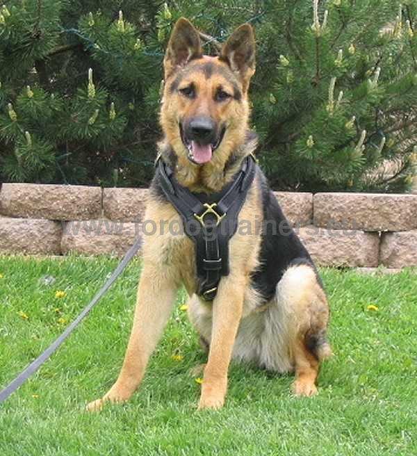 Dog Training Memphis Tn