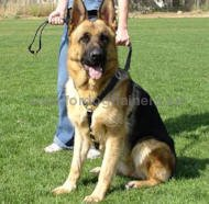 Step-in Harness for German Shepherd Extra Quality➯