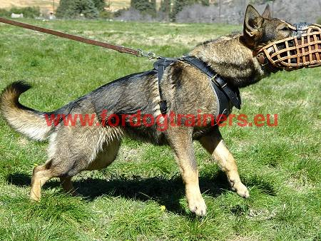 Agitation harness for GSD - the dog in attack work