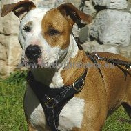 Amstaff Luxury Handcrafted Leather Large Harness ➼
