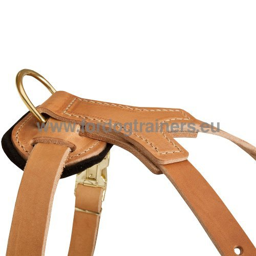 Strong Straps of Dog Harness