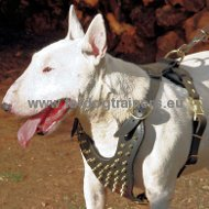 Spiked leather dog harnesses for Bull Terrier