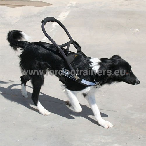 Harness for Assistance Dog Collie