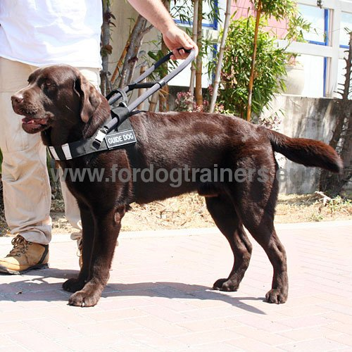 Dog Harness for Guide Dog Labrador