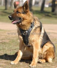 German Shepherd Luxury Handcrafted Padded Leather Harness