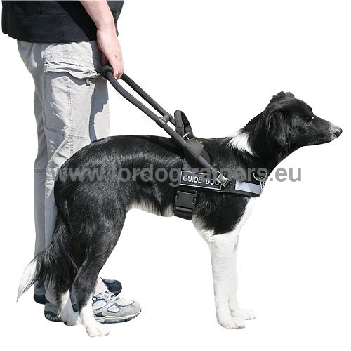 Nylon Harness Reliable for Collie