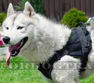 Nylon Harness for Husky