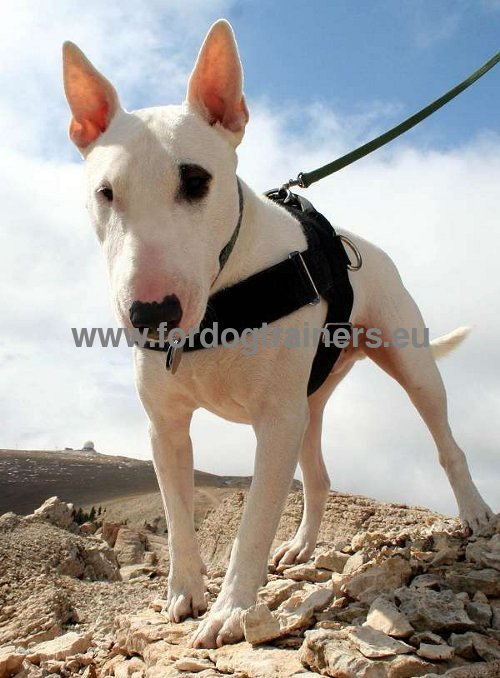 Wear-Resistant Dog Harness