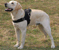 Labrador Nylon multi-purpose dog harness H6
