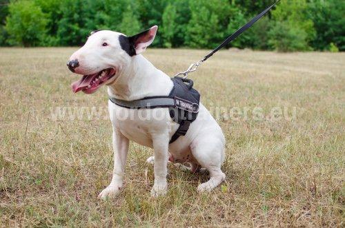 Harnais en polyester pour Bull Terrier